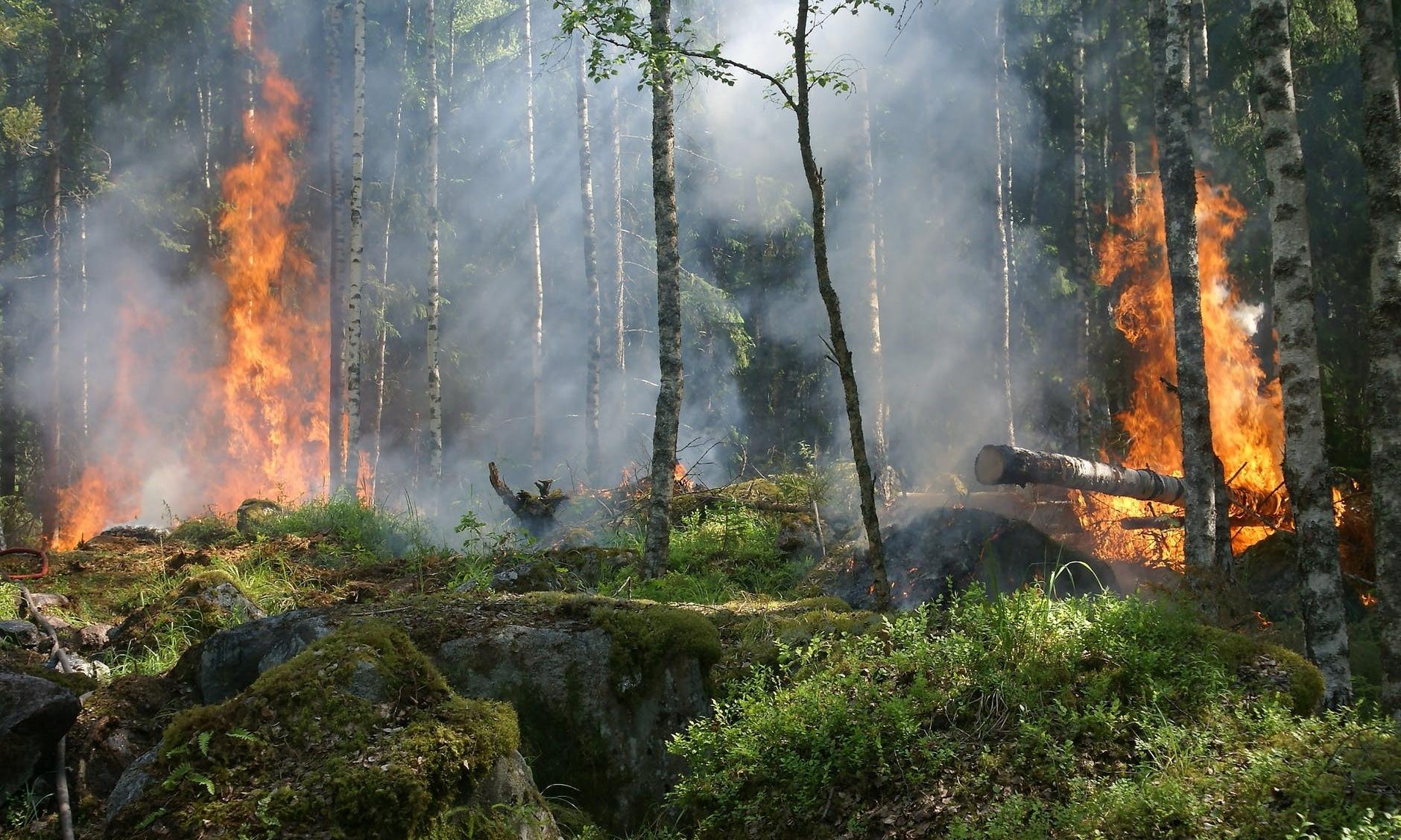 LVMH 将斥资 500 万欧元保护亚马逊雨林生态系统
